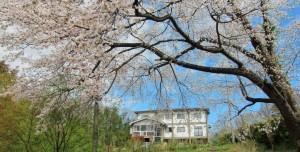 窓から山桜を一望です。